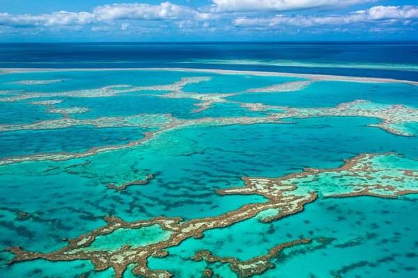 korall2