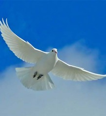 szerklead peace