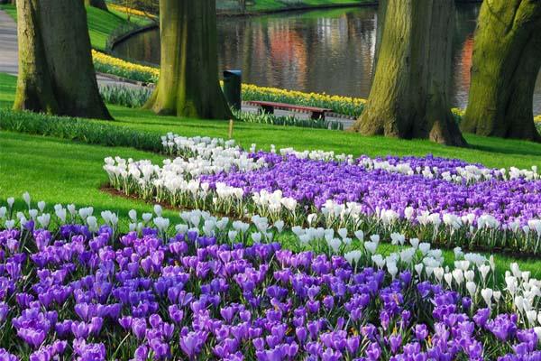 A holland Keukenhof tulipánpark - a világ legnagyobb virágoskertje