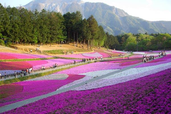 Hokkaido03