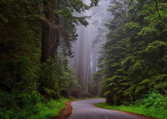 Mit adnak nekünk az erdők és a fák