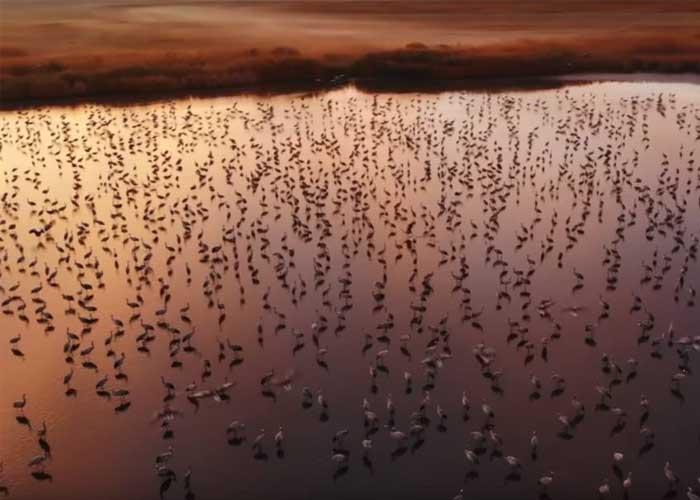 Daru madarak a Hortobágyon