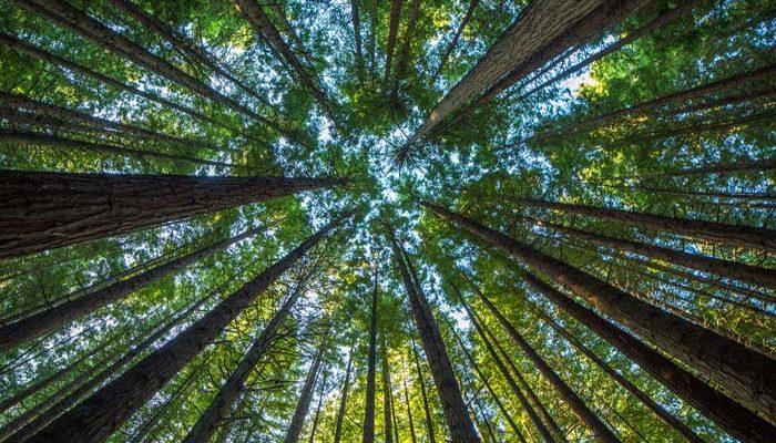 2019 legjobb hírei - pozitív környezetvédelmi körkép