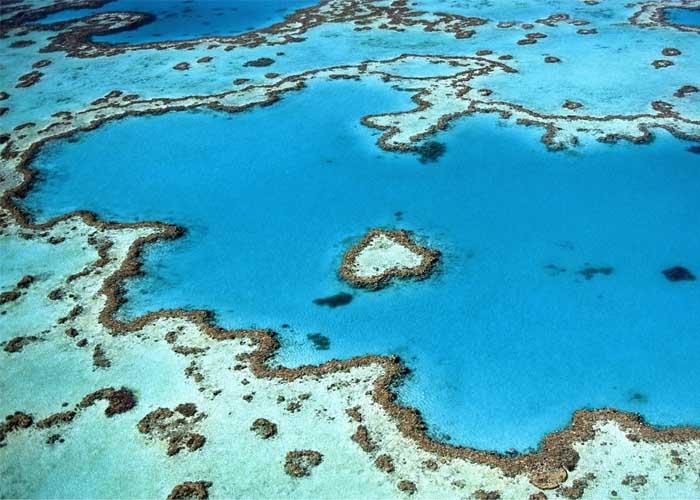 Robotok gyógyítják a sérült korallokat – elkezdődött a Nagy-korallzátony megmentése